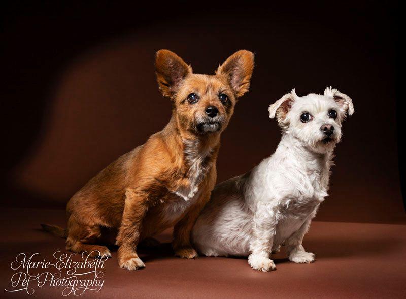 Marie-Elizabeth Pet Photography