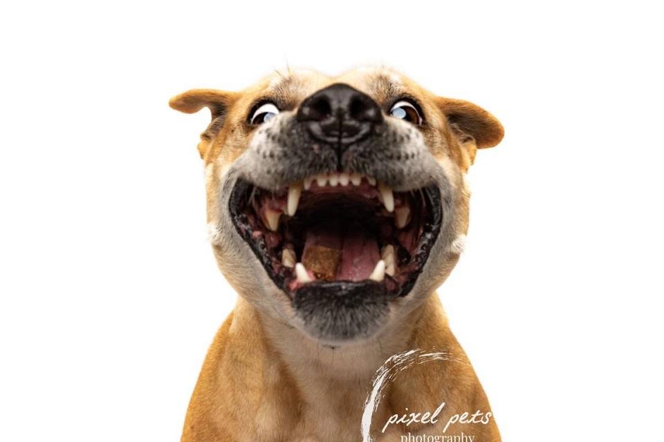 Pixel Pets Photography