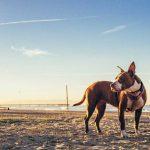 pet photography gold coast