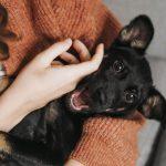 pet photography perth